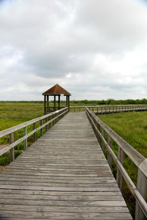 South Texas Botanical Gardens & Nature Center: On one of the several boardwalks thru wetlands