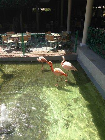 Iberostar Dominicana Hotel: preciosas instalaciones