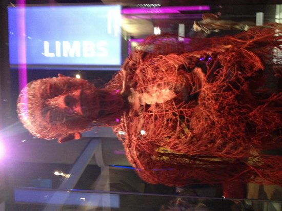 Museum of Science and Industry : Blood vessel man