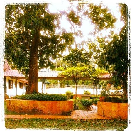 Ayuryogashram: Garden