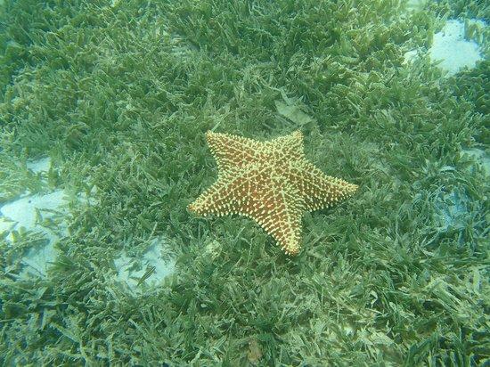 Coyaba Beach Resort: Étoile de mer en plongée