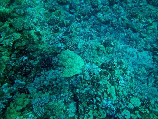 Aqua Adventures : Molakini Reef