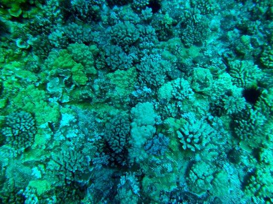Aqua Adventures: Molakini Reef