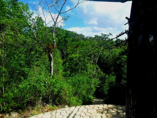 Calico Jack's Belize Jungle Canopy and Zip Lining: Last (short) zipp=-line