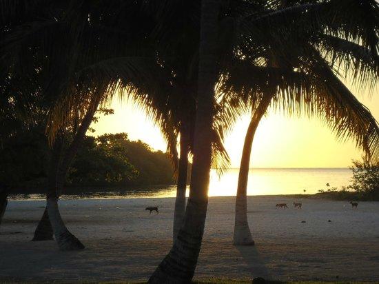 Hotel Costa Larimar: Playa detras del hotel