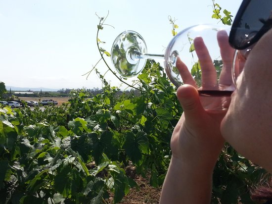 Grapeline Wine Tours: cheers!
