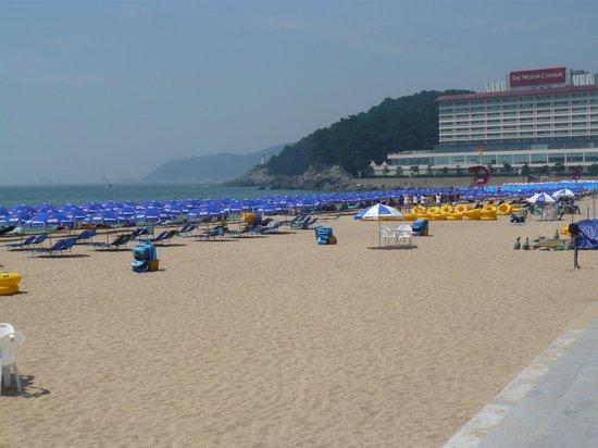The Westin Chosun Busan : 朝一はまだそれほどでも