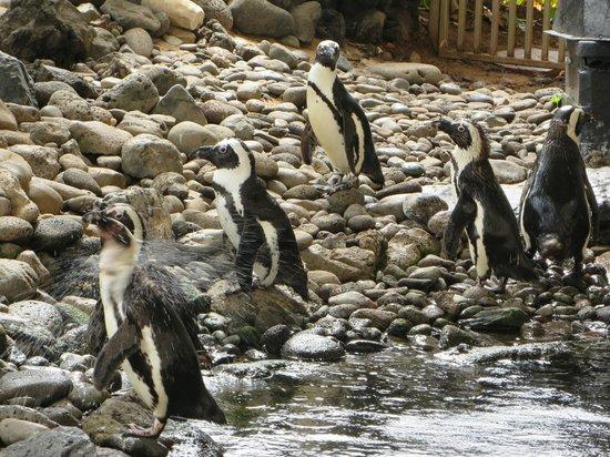 Hyatt Regency Maui Resort and Spa: Penguins