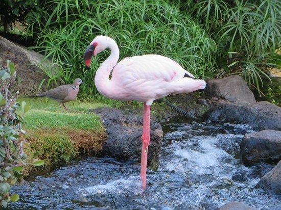 Hyatt Regency Maui Resort and Spa: Wildlife