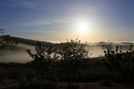 Wild Coyote Estate Winery Bed & Breakfast: fog over the vineyards in the morning
