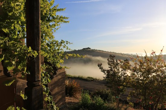 Wild Coyote Estate Winery Bed & Breakfast: the morning view from our back porch