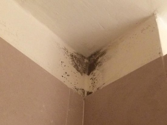 InterContinental de la Ville: Mold in bathroom