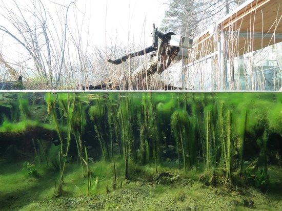 Alpenzoo: Жизнь по водой