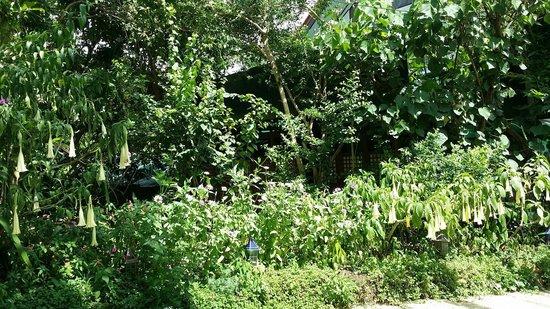 Sonya's Secret Garden: The view everywhere