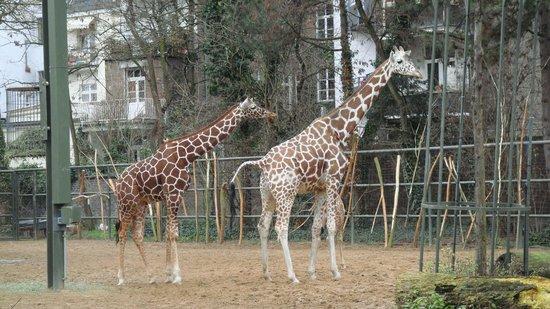 Kölner Zoo: ЗООПАРК