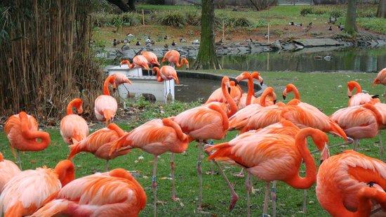 Kölner Zoo: ФЛАМИНГО