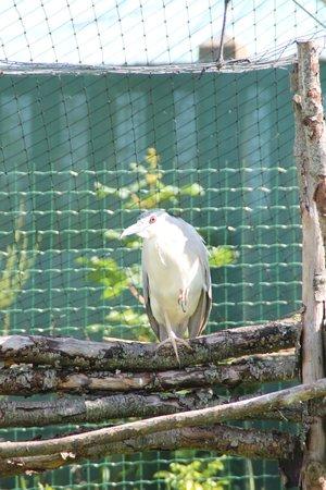 Parc Zoologique de Fort Mardyck: oiseaux prédateurs