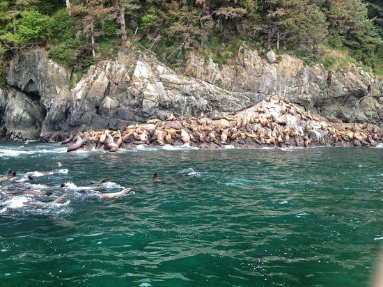 Lu Lu Belle Tours: Just a few of those Sea Lions!