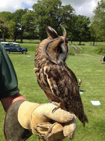 East Sussex Falconry: OWL