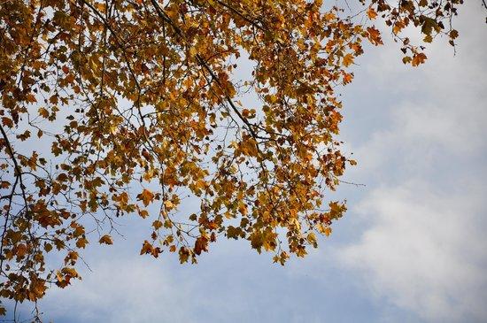 Lakeside Promenade Fleuri: Maple tree in Autumn