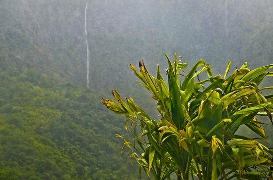 Hike Maui : Lots of waterfalling on the side of the mountain!