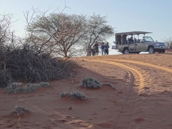 Kalahari Anib Lodge: Out and about on the 'evening' safari.