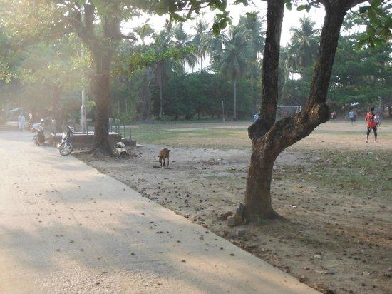 Koh Mook Sivalai Beach Resort : Aus der Anlage raus Richtung Dorf