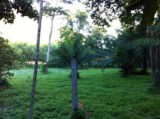 Huai Kha Khaeng Country Home Resort : ต้นไม้ร่มรื่น