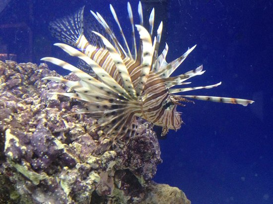 Team ECCO Ocean Center & Aquarium: lion fish