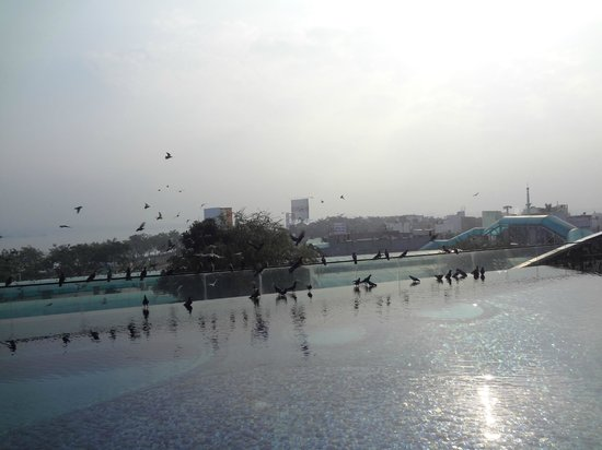 The Park Hyderabad: Pool side