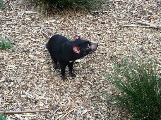 Healesville Sanctuary: 'Buddy'