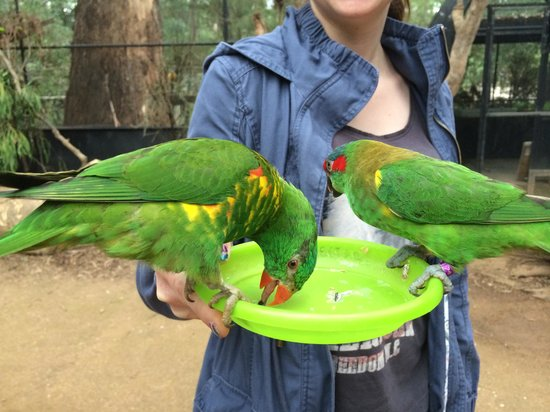 Healesville Sanctuary: Feeding the Parrots