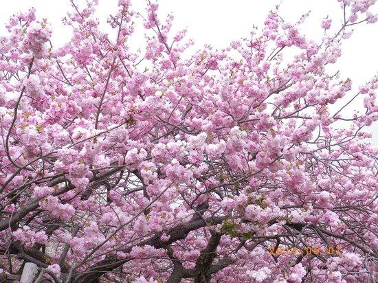Matsumae Park: 糸括
