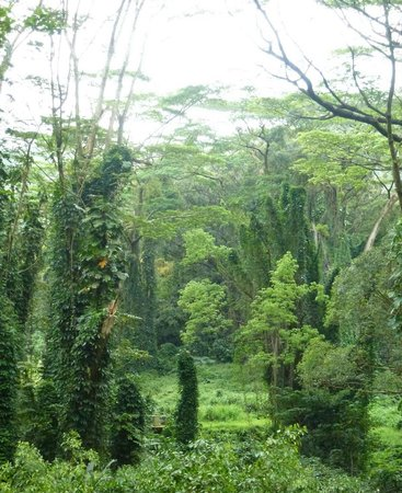 "Manoa Falls: ""Дождевой"" лес - красота парка Маноа"