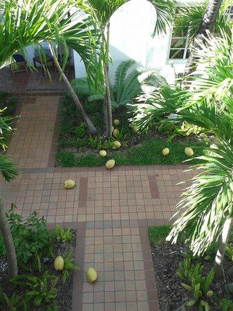 Tradewinds Apartment Hotel: Kokosnoten bij het zijraam.