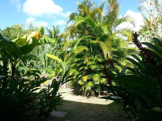 Residence Orcea : Superbe jardin arboré