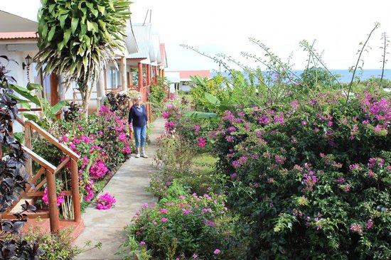Cabanas Te Pito Kura: In front of the Cabanas