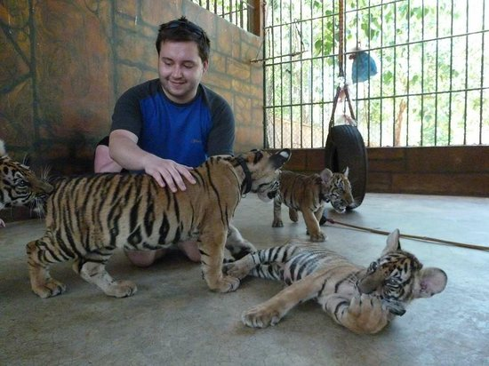 Tiger Temple Thailand Tour : Playing with the cubs