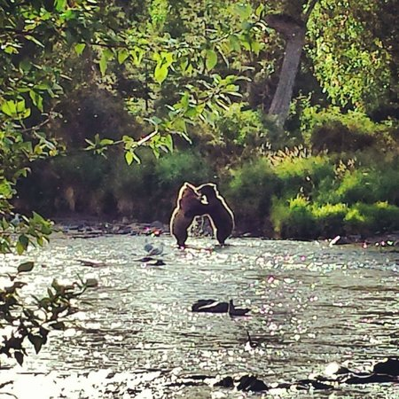 Drifter's Lodge: How many people can say they saw 2 bears wrestling in person?!