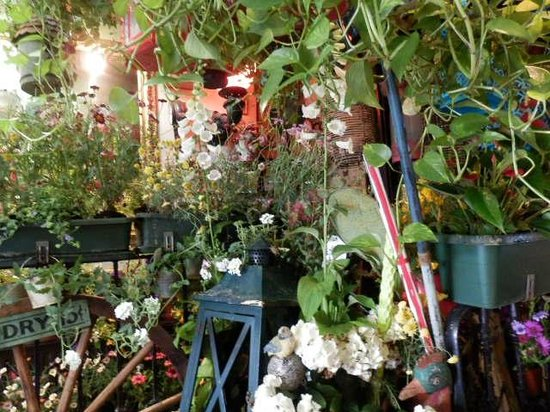 The Churchill Arms : Indoor garden in the Thai restaurant
