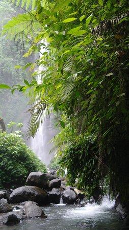 Sekumpul Waterfalls: the falls