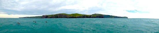 Black Cat Cruises: Akaroa cliffs