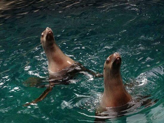 Vancouver Aquarium : Foche