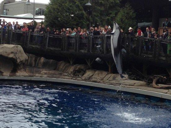 Vancouver Aquarium: Delfino