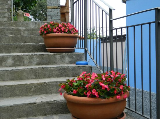 Cinqueterre Residence : Beautiful flowers all over the hotel grounds