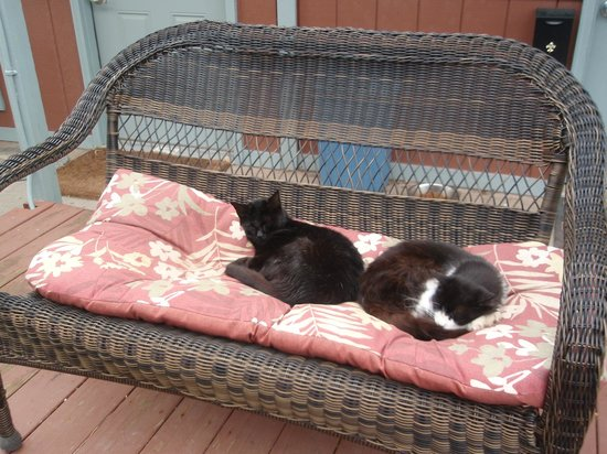 Arbor House Country Inn: a couple of the outside cats