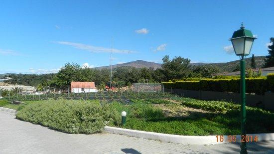 Alexandra Beach Thassos Spa Resort: organic vegetables grown in the grounds