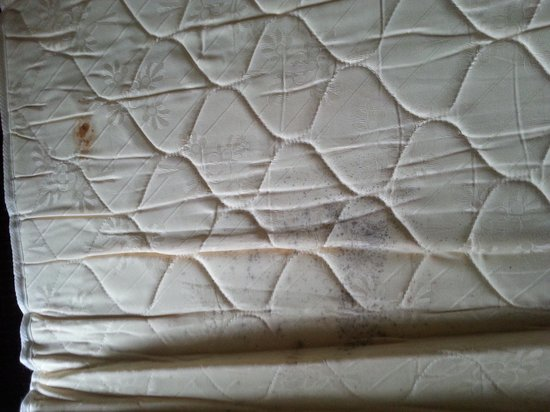 Red Roof Inn & Suites Pigeon Forge - Parkway: mold on mattress rwd roof inn pigeon forge