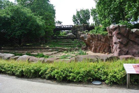 Antwerp Zoo (Dierentuin) : Recinto dos Leões