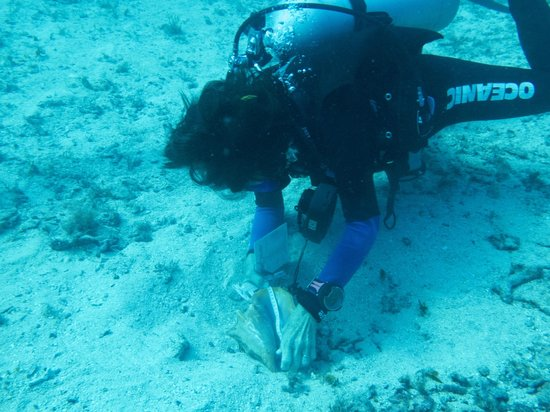 Measuring Conch for ReefCI